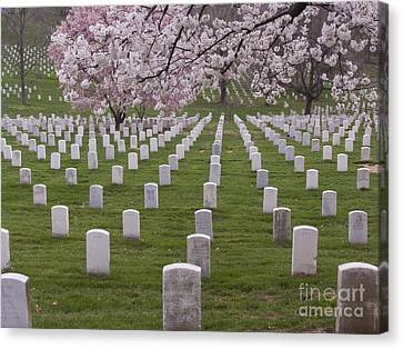 Graves Of Heros In Arlington National Cemetery Canvas Print by Tim Grams