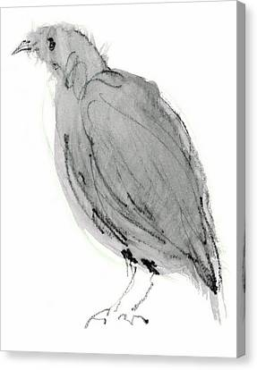 Gray Bird Canvas Print by Annabel Andrews
