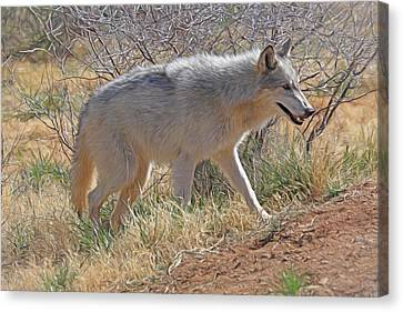 Gray Wolf Canvas Print by Donna Kennedy