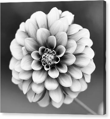 Graytones Flower Canvas Print by Photography På