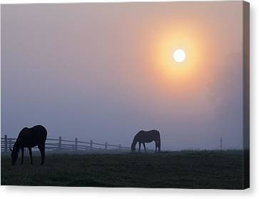 Grazing In The Fog At Sunrise Canvas Print by Bill Cannon