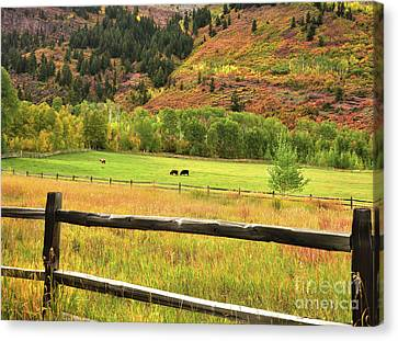 Grazing In The Grass Canvas Print by Jim Chamberlain