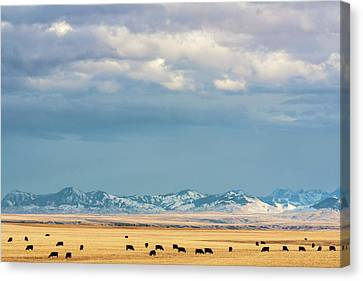 Grazing Near Highwood Canvas Print by Todd Klassy