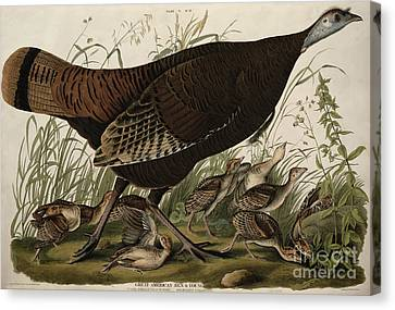 Great American Hen And Young Canvas Print by John James Audubon