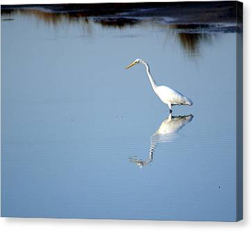 Great Blue 2 Canvas Print by Marty Koch