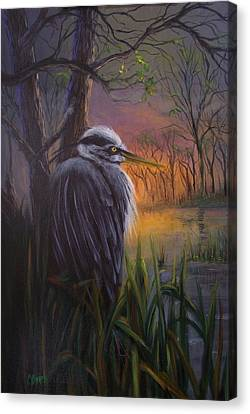 Great Blue At Sunset Canvas Print by Colleen Birch