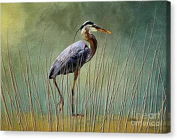 Great Blue At The Beach Canvas Print by Lois Bryan