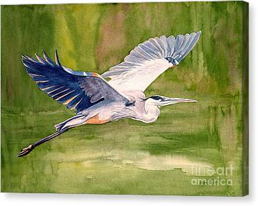 Great Blue Heron Canvas Print by Pauline Ross