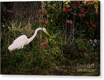 Great Egret In The Garden Canvas Print by Zina Stromberg