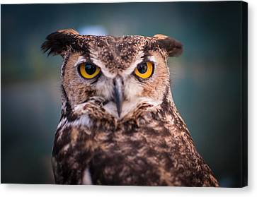Great Horned Owl Canvas Print by Ralph Vazquez