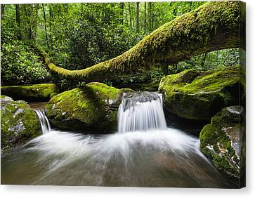 Great Smoky Mountains National Park Roaring Fork Canvas Print by Mark VanDyke
