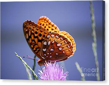 Great Spangled Fritillary Canvas Print by Randy Bodkins