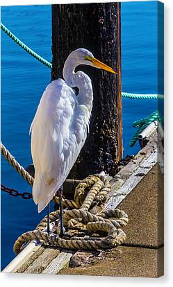 Great White Heron On Boat Dock Canvas Print by Garry Gay