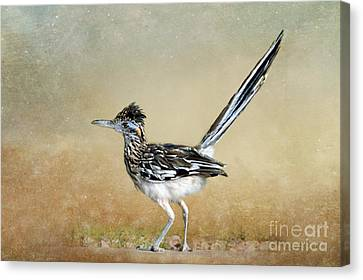 Greater Roadrunner 2 Canvas Print by Betty LaRue