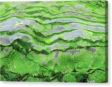 Green Algae Patterns On Exposed Rock At Low Tide, Gros Morne National Park, Ontario, Canada Canvas Print by Altrendo Nature
