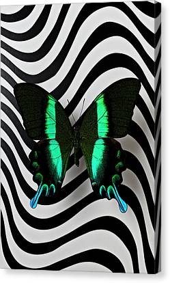 Green And Black Butterfly On Wavey Lines Canvas Print by Garry Gay