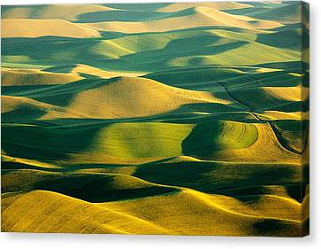 Green And Gold Acres Canvas Print by Todd Klassy