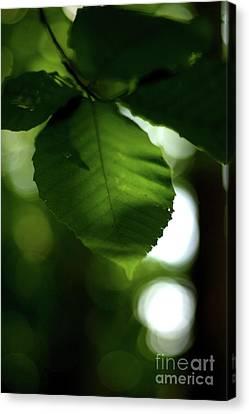 Green Canvas Print by Ashley Johnson