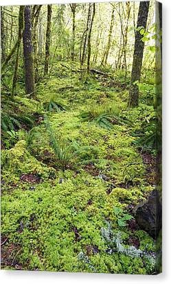 Green Foliage On The Forest Floor Canvas Print by Craig Tuttle