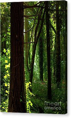 Green Forest Canvas Print by Carlos Caetano