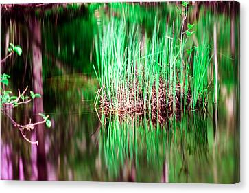 Green Grass In Water Canvas Print by Toppart Sweden