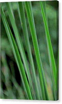 Green Lines Canvas Print by Odd Jeppesen