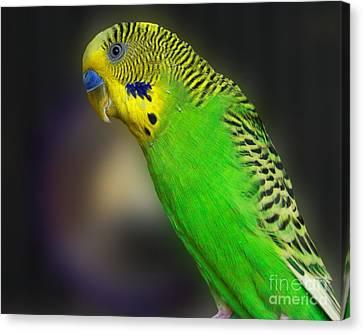 Green Parakeet Portrait Canvas Print by Jai Johnson