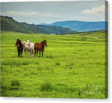 Green Pastures Canvas Print by Jon Burch Photography