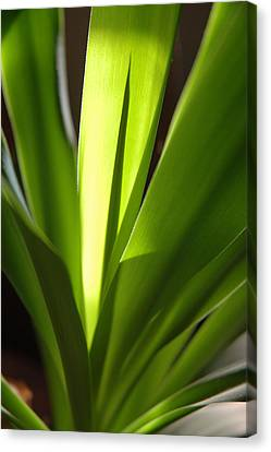 Green Patterns Canvas Print by Jerry McElroy