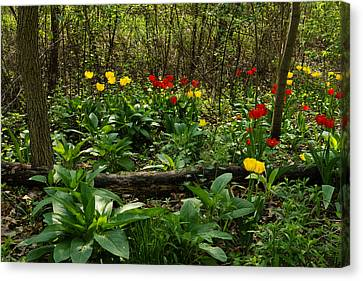 Green Yellow And Red - Tulip Forest Impressions  Canvas Print by Georgia Mizuleva