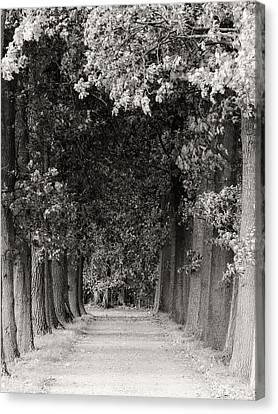 Greeted By Trees Canvas Print by Wim Lanclus