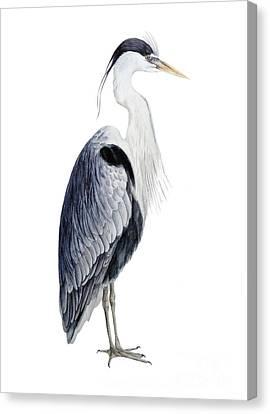 Grey Heron Canvas Print by Marie Burke