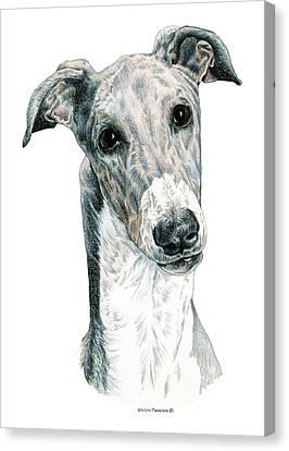 Greyhound Canvas Print by Kathleen Sepulveda