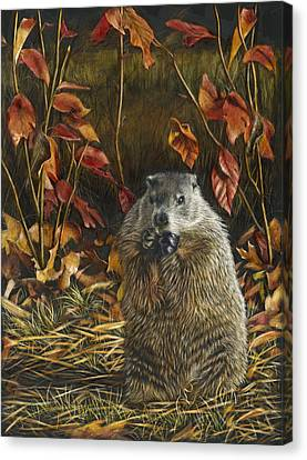 Groundhog Bulking Up For Winter Canvas Print by Susan Donley
