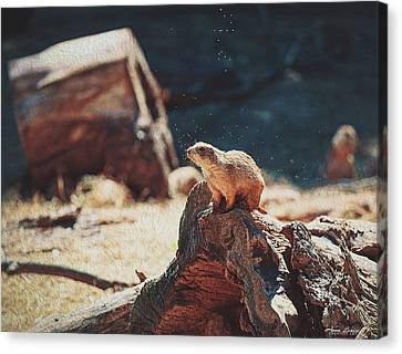 Groundhog Watch Canvas Print by Anna Louise
