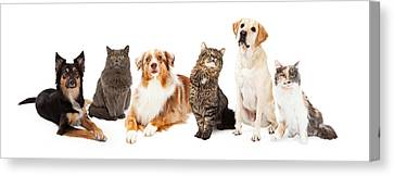 Group Of Cats And Dogs Canvas Print by Susan Schmitz