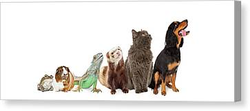 Group Of Pets Looking Up And Side Banner Canvas Print by Susan Schmitz