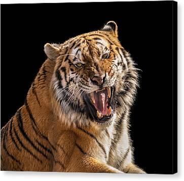 Growling Tiger Canvas Print by Pat Eisenberger