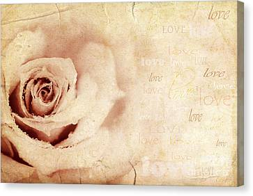 Grungy Rose Background Canvas Print by Anna Om