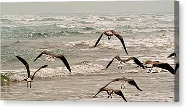 Gulf Gulls Canvas Print by Michael Flood