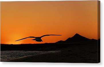 Gull At Sunset Canvas Print by Dave Dilli