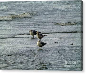Gulls At A Seattle Beach Canvas Print by As the Dinosaur Flies Photography
