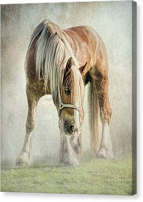 Gypsy In Morning Mist. Canvas Print by Brian Tarr