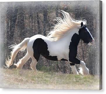 Gypsy Stallion Esperanzo Canvas Print by Terry Kirkland Cook