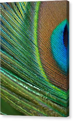 Half Cocked Canvas Print by Lisa Knechtel