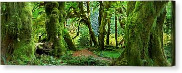 Hall Of Mosses - Craigbill.com - Open Edition Canvas Print by Craig Bill