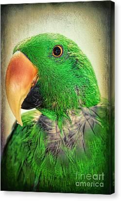 Handsome Parrot Canvas Print by Mariola Bitner