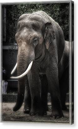 Hanging Out Canvas Print by Joan Carroll