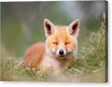 Happy Baby Fox Canvas Print by Roeselien Raimond