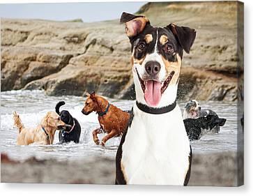 Happy Dog Having Fun At Dog Beach Canvas Print by Susan Schmitz